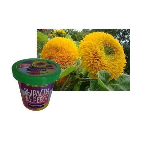 Купить Набор для выращивания Зеленый капитал Вырасти, дерево! «Подсолнечник декоративный»