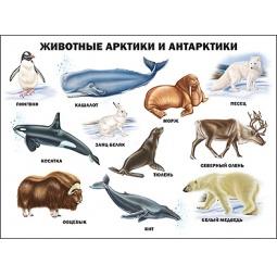 фото Животные Арктики и Антарктики. Плакат