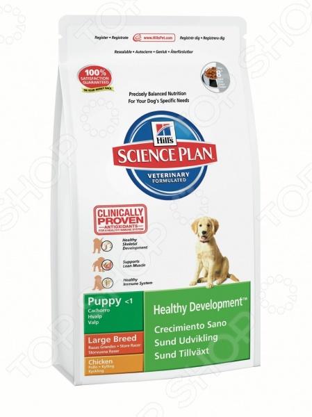 Корм сухой для щенков крупных пород Hill 39;s Курица относится к кормам премиум класса и представляет собой полноценное и сбалансированное питание для вашего питомца. Рацион изготовлен из натуральных отборных ингредиентов и обогащен уникальным комплексом витаминов и антиоксидантов для поддержки иммунной системы животного. Рацион не содержит в своем составе красителей и искусственных консервантов. Корма Hill 39;s это результат работы лучших ветеринарных врачей, диетологов и ученых-нутрициологов. Hill 39;s Science Plan Puppy Healthy Development Large Breed Chicken разработан для кормления щенков крупных пород вес взрослой собаки более 25 кг в возрасте до 1-го года в период отъема от матери. В корме содержится один из важных компонентов материнского молока DHA-кислота. Внимание! В период кормления не рекомендуется использовать дополнительное питание или пищевые добавки особенно содержащие кальций , так как это может привести к нарушению сбалансированности рациона. Основные преимущества:  DHA-кислота обеспечивает нормальное развитие головного мозга и сетчатки глаза.  Аминокислота L-карнитин способствуют поддержанию мышечной массы и правильному формированию костного скелета.  Жирная кислота Омега-3 является структурным компонентом клеточных мембран и способствует поддержанию тонуса кровеносных сосудов.  Жирная кислота Омега-6 способствует улучшению состояния кожи и шерсти животного.  Натуральная клетчатка благотворно влияет на работу ЖКТ.  Витамины А и Е являются мощными антиоксидантами и способствует нейтрализации свободных радикалов и поддержанию иммунитета. Как перевести собаку на корм Hill 39;s Science Plan Puppy Healthy Development Large Breed Chicken: Перевод животного на новый рацион рекомендуется производить постепенно в течение 7 дней . Для этого необходимо смешивать уже привычный корм с новым, каждый день увеличивая дозу последнего, до полного перехода на Hill 39;s Science Plan. Корм не рекомендуется к питанию:  Беременным и лактирующим собакам.  Кошкам. Руково