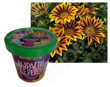 Набор для выращивания Зеленый капитал «Африканская ромашка» zk-031 наборы для выращивания вырасти дерево набор для выращивания розмарин