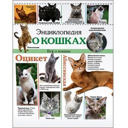 фото Энциклопедия о кошках. Все о кошках