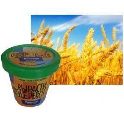 фото Набор для выращивания Зеленый капитал Вырасти, дерево! «Пшеница»