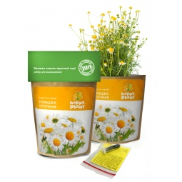 фото Набор для выращивания Happy Plant «Ромашка»