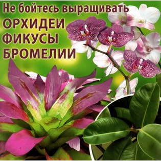 Купить Не бойтесь выращивать орхидеи, фикусы, бромелии