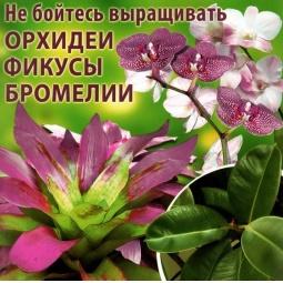 фото Не бойтесь выращивать орхидеи, фикусы, бромелии