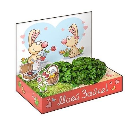 Купить Подарочный набор Happy Plant «Живая открытка: Моей Зайке»