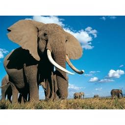 Купить Большой пазл-головоломка Uncle Milton «Слон»