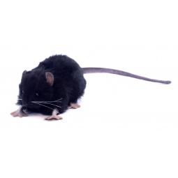 фото Мягкая игрушка Hansa «Крыса черная»