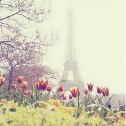 фото Картина Феникс-Презент «Весна в Париже»