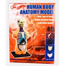 фото Набор обучающий Shantou Gepai «Анатомия человека»