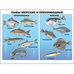 Купить Рыбы морские и пресноводные. Плакат