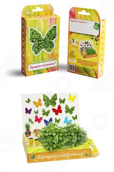 Набор подарочный для выращивания Happy Plant «Живая открытка: Поздравляю-Хорошего настроения!» наборы для выращивания happy plant подарочный набор живая открытка с любовью