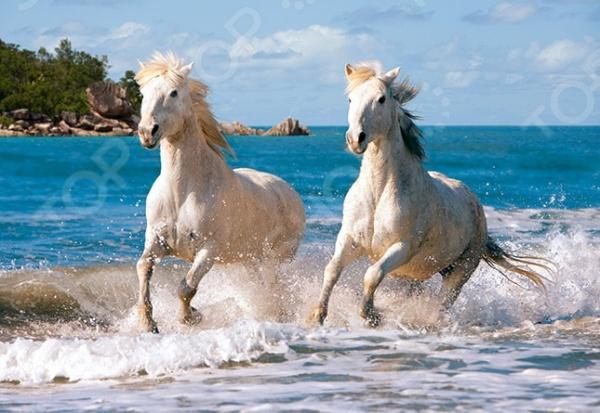 Пазл 1000 элементов Castorland «Белая лошадь»