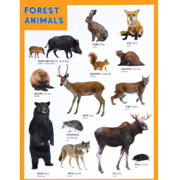 Купить Forest Animals. Лесные обитатели