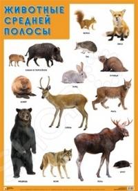 Этот плакат познакомит детей с медведем, куницей, оленем, рысью и многими другими удивительными животными средней полосы. Великолепные яркие фотографии обязательно заинтересуют ребят.