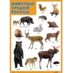 Купить Животные средней полосы