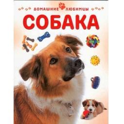 Купить Собака