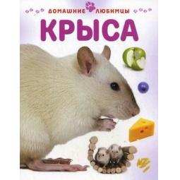 Купить Крыса