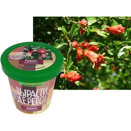 Купить Набор для выращивания Зеленый капитал Вырасти, дерево! «Гранат обыкновенный»