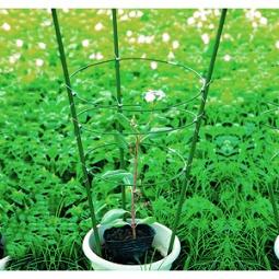 Купить Поддержка для цветов GREEN APPLE GFS