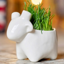 Купить Набор для выращивания Экочеловеки Eco «Овечка»