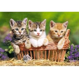 Купить Пазл 500 элементов Castorland «Три котенка»