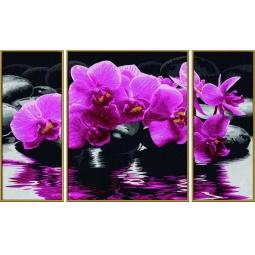 Купить Набор для рисования по номерам Schipper «Орхидеи»