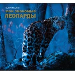 Купить Мои знакомые леопарды