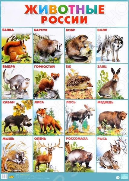 Животные РоссииДемонстрационные материалы<br>Плакаты знакомят детей дошкольного и младшего школьного возраста с окружающим миром.<br>