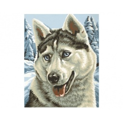 Купить Набор для рисования по номерам Schipper «Хаски»