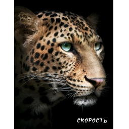 фото Блокнот настоящего хищника. Гепард