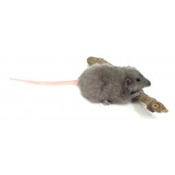 фото Мягкая игрушка Hansa «Крыса серая»