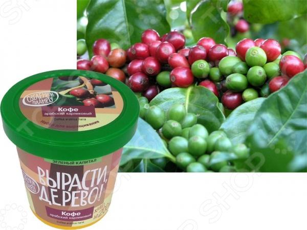 Набор для выращивания Зеленый капитал «Кофе арабский»