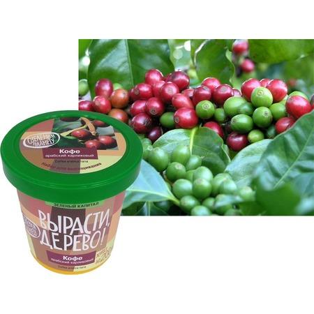 Купить Набор для выращивания Зеленый капитал Вырасти, дерево! «Кофе арабский»