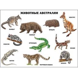 Купить Животные Австралии. Плакат