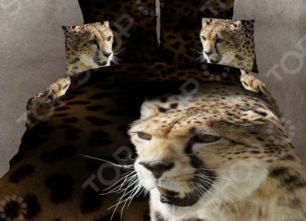 Комплект постельного белья Buenas Noches Gepard. Satin Fotoprint. 2-спальный2-спальные<br>Buenas Noches Gepard. Satin Fotoprint это комплект постельного белья нового поколения , предназначенного для молодых и современных людей, желающих создать модный интерьер спальни и сделать быт более комфортным. Белье из великолепной сатиновой ткани станет украшением любой спальни. Главной особенностью модели является эффект 3D, который буквально оживляет изображенных зверей, привнося невероятную атмосферу в помещение. При изготовлении постельного белья Buenas Noches используются устойчивые гипоаллергенные красители. Основой для ткани служит натуральный хлопок. Специальный станок изготавливает из тонкой пряжи прочные и гладкие нити атласного переплетения. Ткань, сделанную таким образом, легко узнать по ее особому блеску, мягкости и гладкости. Пошив, происходящий на автоматической линии, гарантирует, что размер белья будет строго соблюдаться. Благодаря уникальным потребительским свойствам, белье не теряет цвет и не садится во время стирки, а на ткани не образуются катышки .<br>