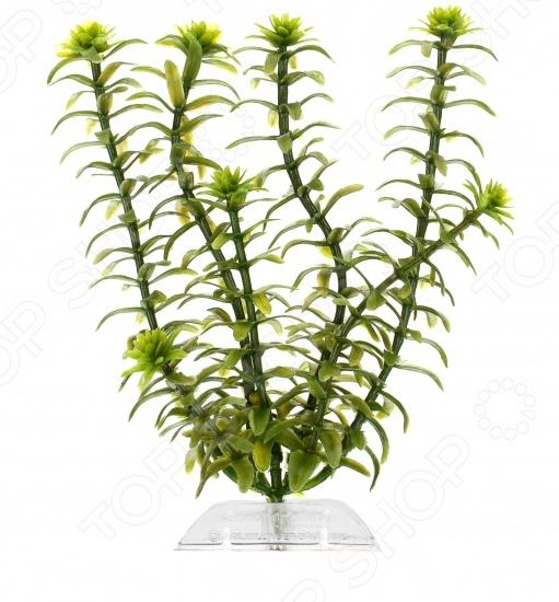Растение искусственное для аквариума Tetra «Элодея»Аквариумный дизайн<br>Не секрет, что красиво оформленный аквариум способен стать настоящим украшением интерьера. Нередко дизайнеры используют его даже в качестве декоративной колонны или перегородки для зонирования пространства. На сегодняшний день имеется несколько базовых стилей оформления аквариумов, самыми популярными из которых являются: голландский, морской, коллекторский и японский сад камней. К основным же элементам декора относятся растения, коряги, камни, корабли, замки и т.д. Растение искусственное для аквариума Tetra Элодея отлично подойдет для украшения вашего аквариума и добавит ему еще большего сходства с морскими глубинами. Благодаря высокой степени детализации, оно выглядит совсем как настоящее. Растение выполнено из высококачественных материалов не загрязняет воду и не выделяет вредные вещества.<br>