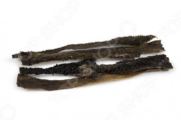 Лакомство для собак TiTBiT 0832 «Желудок говяжий»Лакомства<br>Лакомство для собак TiTBiT 0832 Желудок говяжий вкусное и полезное угощение для вашего четвероногого друга. Оно представляет собой высушенные пластины говяжьего рубца и используется в качестве дополнения к основному рациону питания. Подобные жевательные снеки не только удовлетворяют потребность животного что-нибудь погрызть , но и являются отличной профилактикой зубного камня. Лакомство богато питательными веществами легкоусвояемым белком, ферментами и витаминами группы В , способствующими улучшению пищеварения и восстановлению микрофлоры ЖКТ. В упаковке содержится 4-5 пластин. Длина каждой пластины около 35 см.<br>