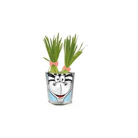 Купить Набор для выращивания Happy Plant «Зебра»