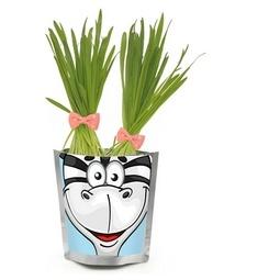 фото Набор для выращивания Happy Plant «Зебра»