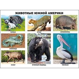 фото Животные Южной Америки. Плакат