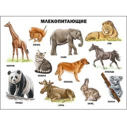 Купить Млекопитающие. Плакат