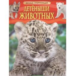 Купить Детеныши животных