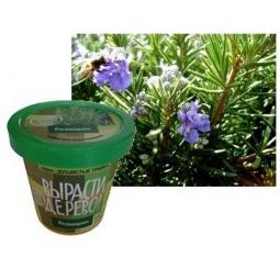 Купить Набор для выращивания Зеленый капитал Вырасти, дерево! «Розмарин»