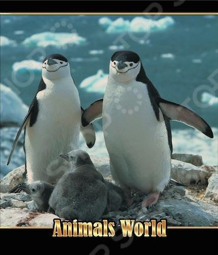 Тетрадь в клетку лакированная Пересвет «Мир животных». В ассортименте