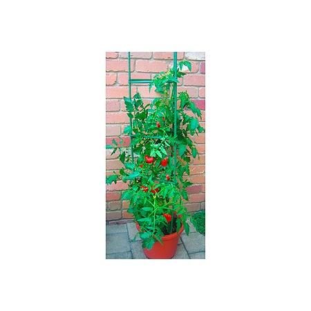 Купить Опора для томатов GREEN APPLE GTC