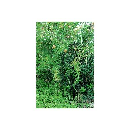 Купить Поддержка для растений спиральная GREEN APPLE GSR-8