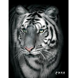 фото Блокнот настоящего хищника. Белый тигр