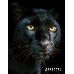фото Блокнот настоящего хищника. Пантера