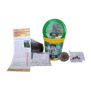 Купить Набор для выращивания Зеленый капитал Вырасти, дерево! «Кедр сибирский»